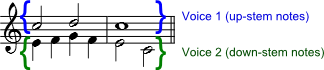 In a polyphonic measure, voice 1 takes the up-stem notes and voice 2 takes the down-stem notes